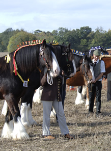 Heavy Horse Events in Surrey Sussex and Hampshire